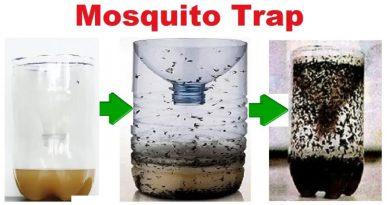 Jak zrobić eko-pułapkę na komary z butelki?