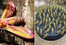 25 przykładów na to, jak niesamowita potrafi być natura