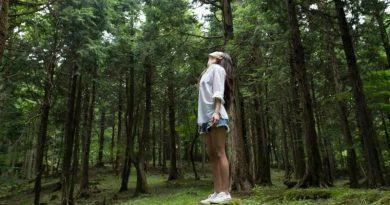 Drzewa czynią ludzi szczęśliwymi. Na czym polega terapia Shinrin-yoku?