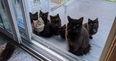 Bezpańska kotka przyprowadziła wszystkie swoje kocięta kobiecie, która ją nakarmiła