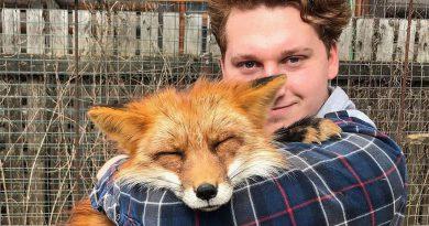 Mężczyzna uratował lisa z fermy, są teraz najlepszymi przyjaciółmi