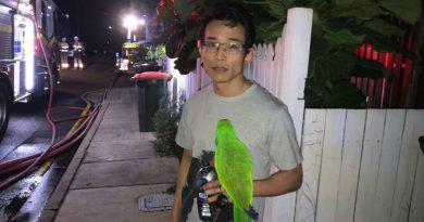 Papuga uratowała właściciela przed pożarem. Zareagowała szybciej niż czujniki dymu