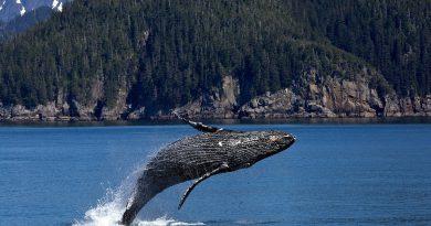 List otwarty naukowców z całego świata wzywa do ochrony waleni