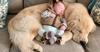 Niezwykła więź między gigantycznym psem i dzieckiem