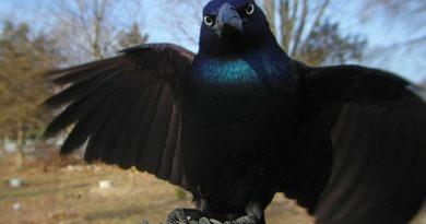 """Kobieta umieściła aparat przy karmiku dla ptaków. Oto co udało jej się """"złapać"""""""