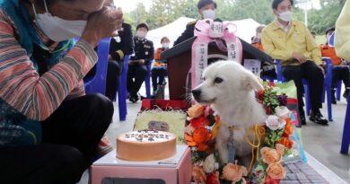 Pies, który uratował 90-letnią właścicielkę z demencją został wyróżniony przez władze